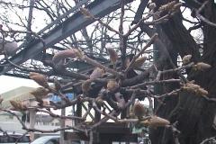 2010-04-02
