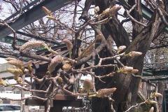2010-04-06
