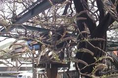 2010-04-13