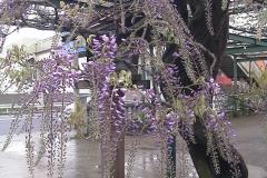 2010-04-23