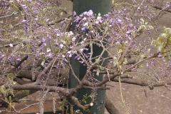 SANYO 2011-04-21